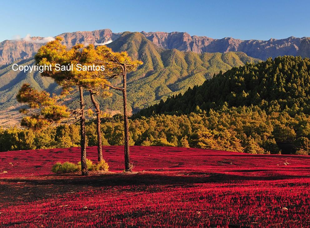 D'impressionnantes valeurs naturellesLes spectaculaires paysages de notre île invitent à en découvrir chacun de ses recoins.